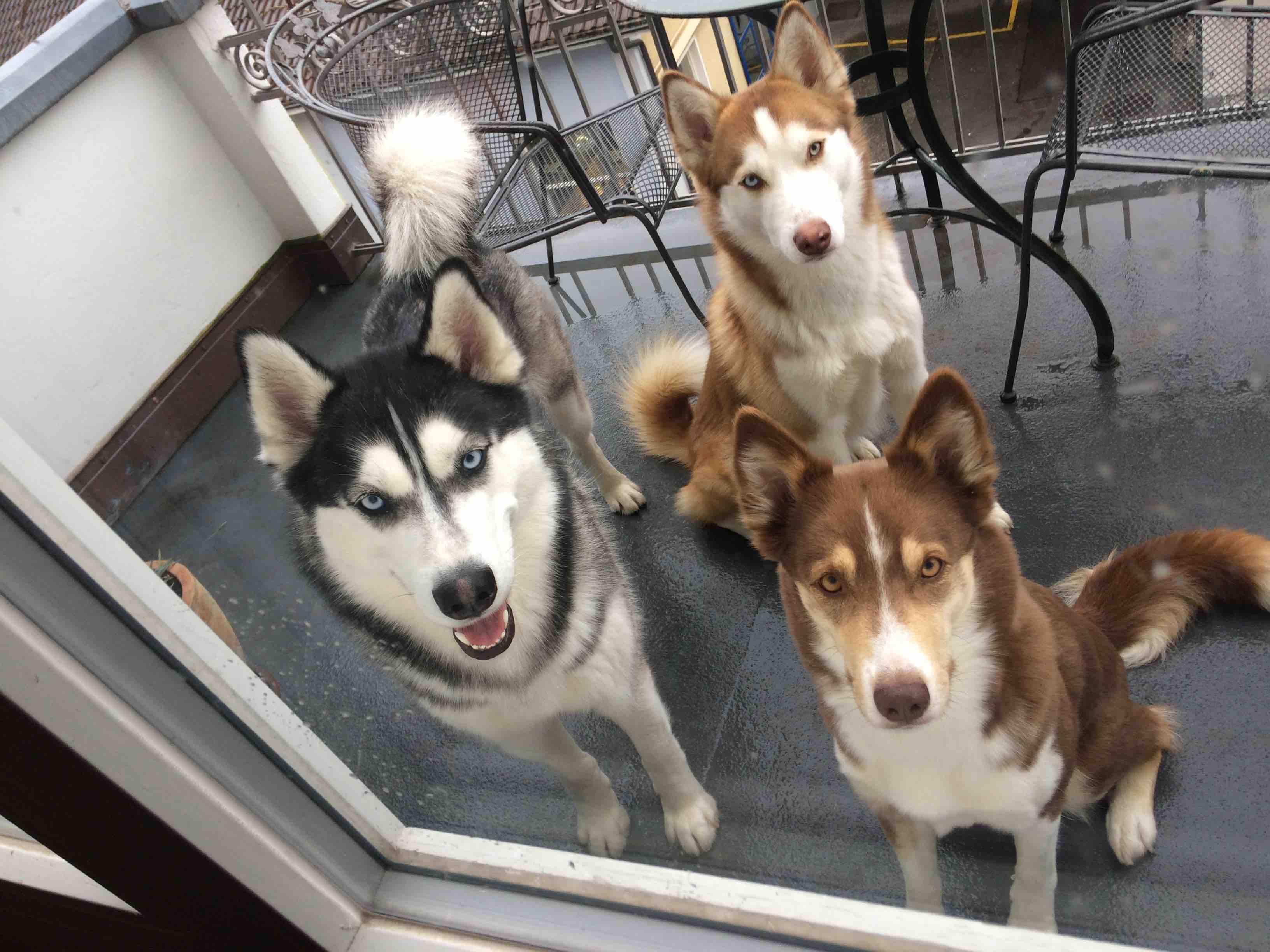 3 Hunde