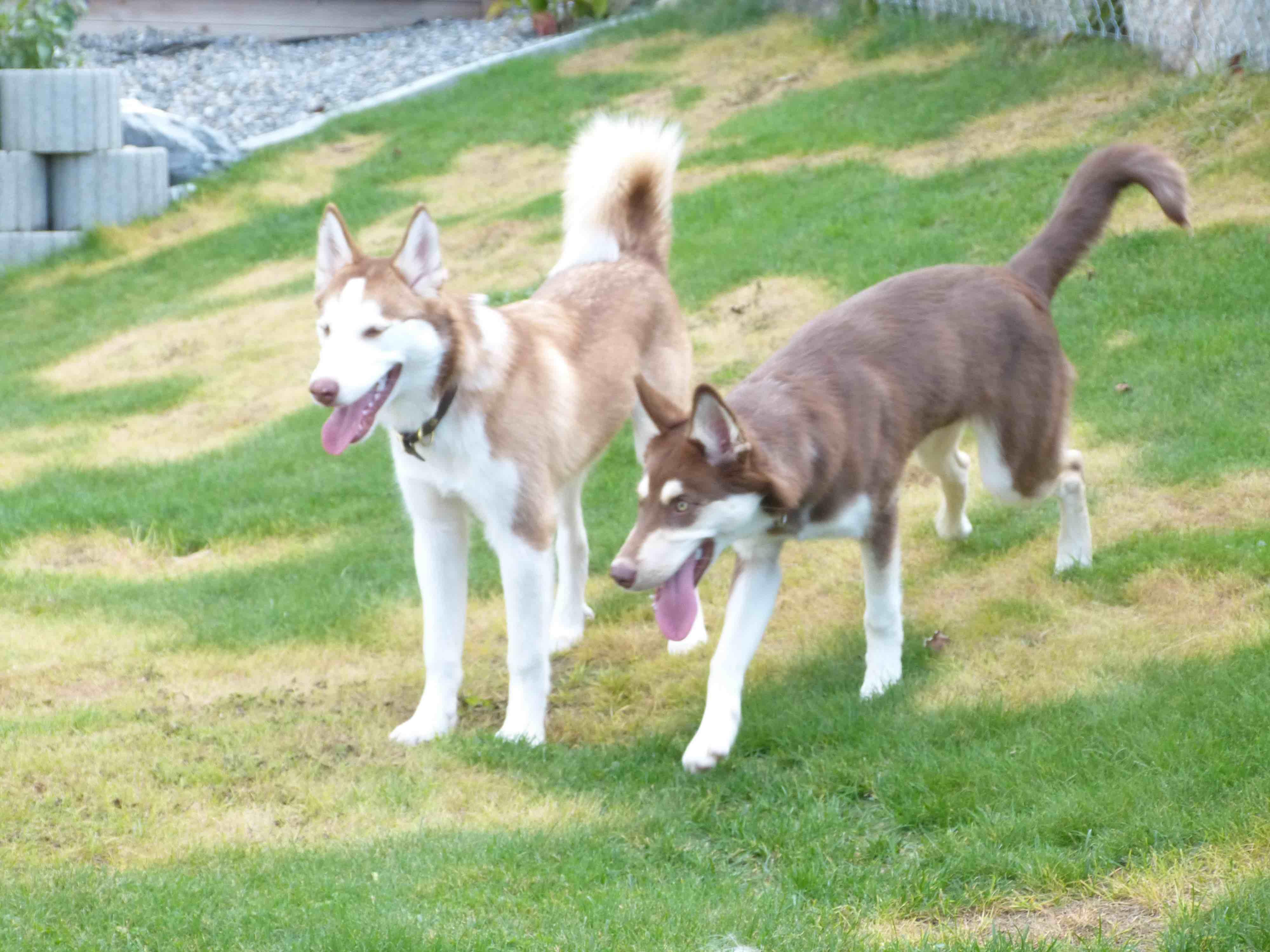 Ely und Nala