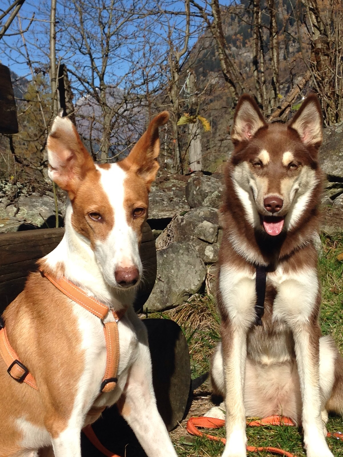 Thomy und Nala